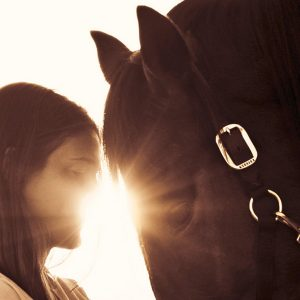 Equine Assisted Therapy Image